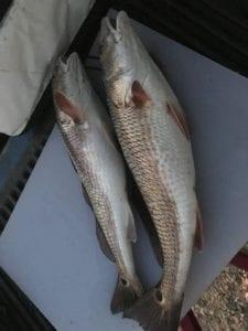 Navarre Kayak Fishing Charters
