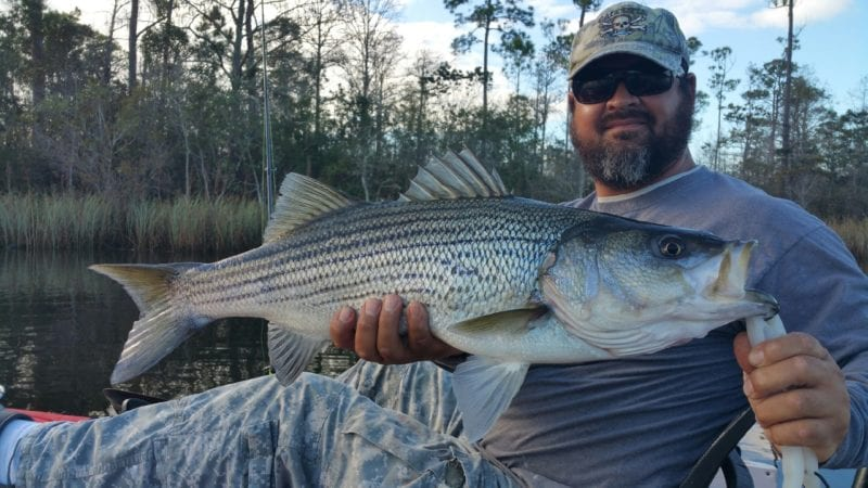 Navarre Inshore Kayak Fishing Charters January